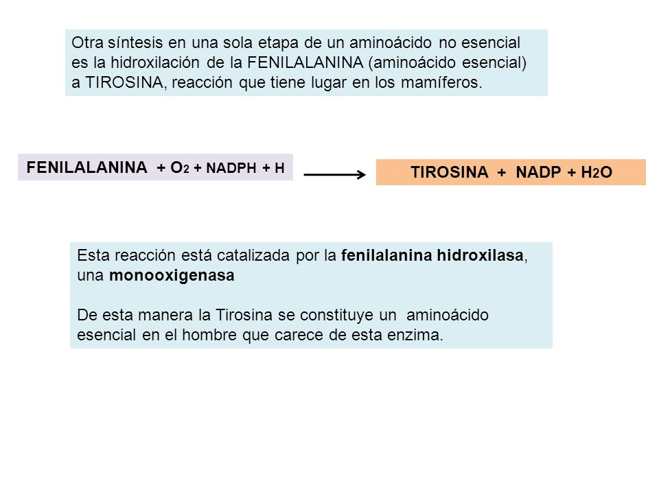 FENILALANINA + O2 + NADPH + H