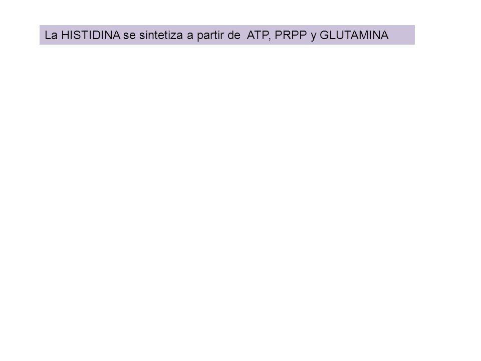 La HISTIDINA se sintetiza a partir de ATP, PRPP y GLUTAMINA