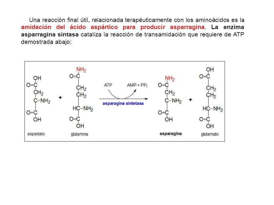 Una reacción final útil, relacionada terapéuticamente con los aminoácidos es la amidación del ácido aspártico para producir asparragina.