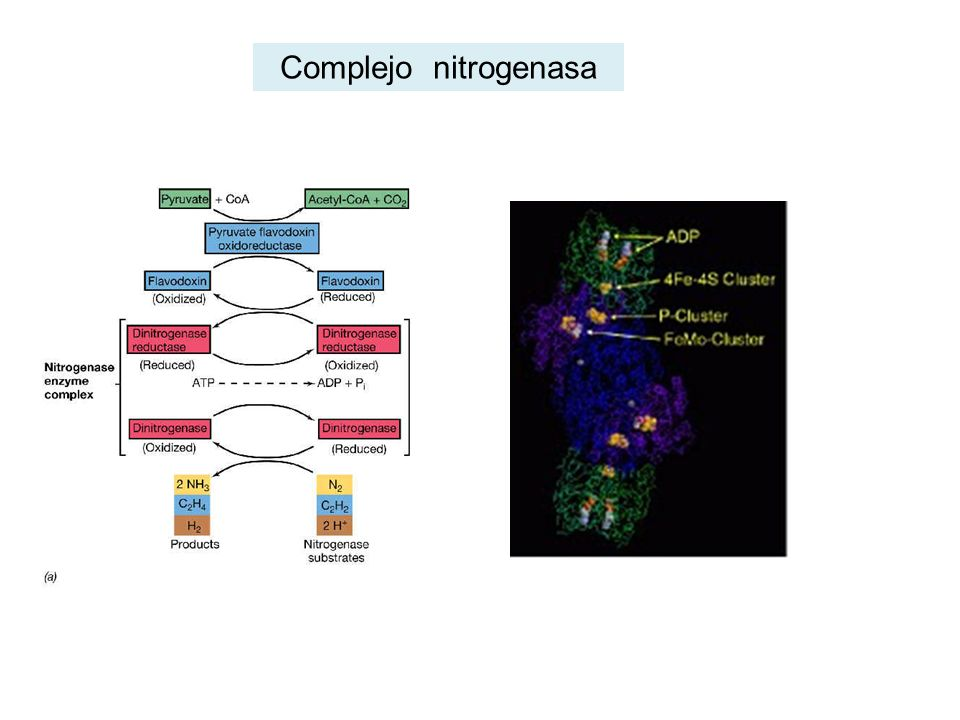 Complejo nitrogenasa