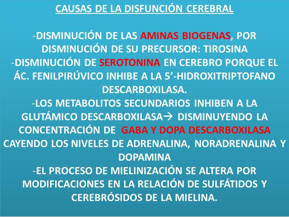 CAUSAS DE LA DISFUNCIÓN CEREBRAL
