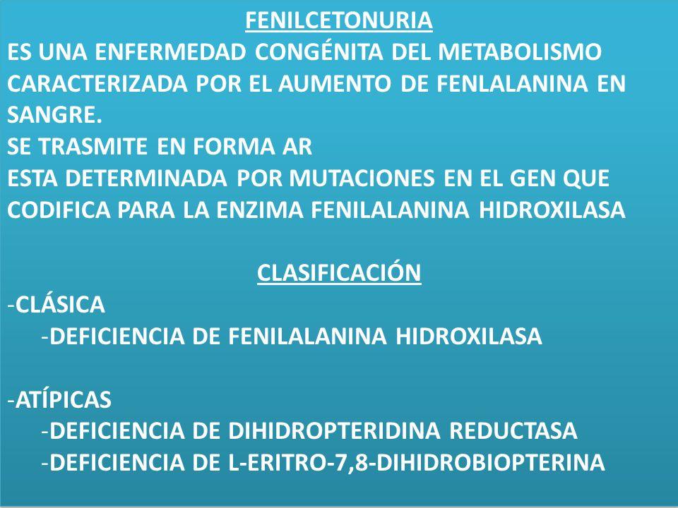 FENILCETONURIAES UNA ENFERMEDAD CONGÉNITA DEL METABOLISMO CARACTERIZADA POR EL AUMENTO DE FENLALANINA EN SANGRE.
