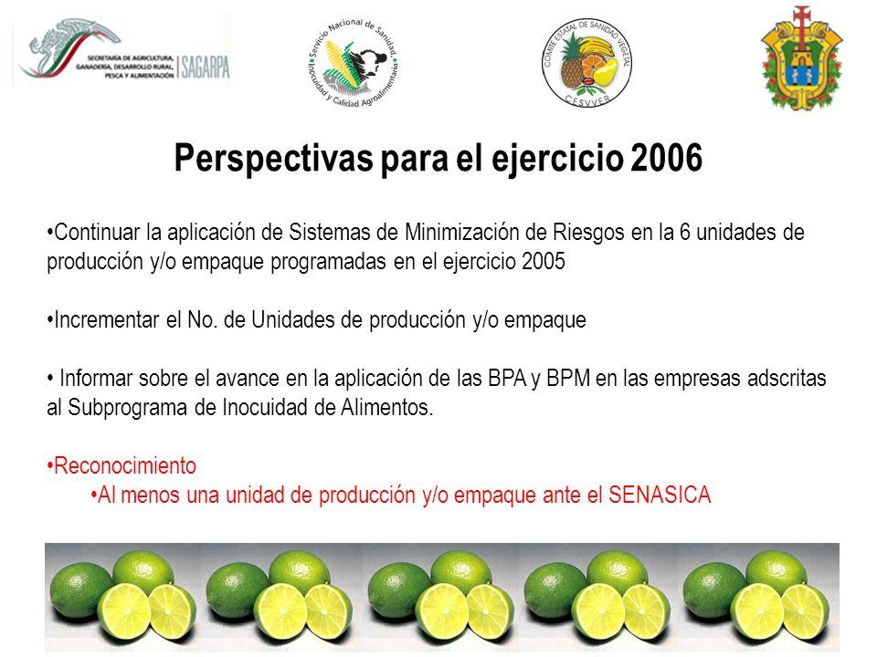 Perspectivas para el ejercicio 2006