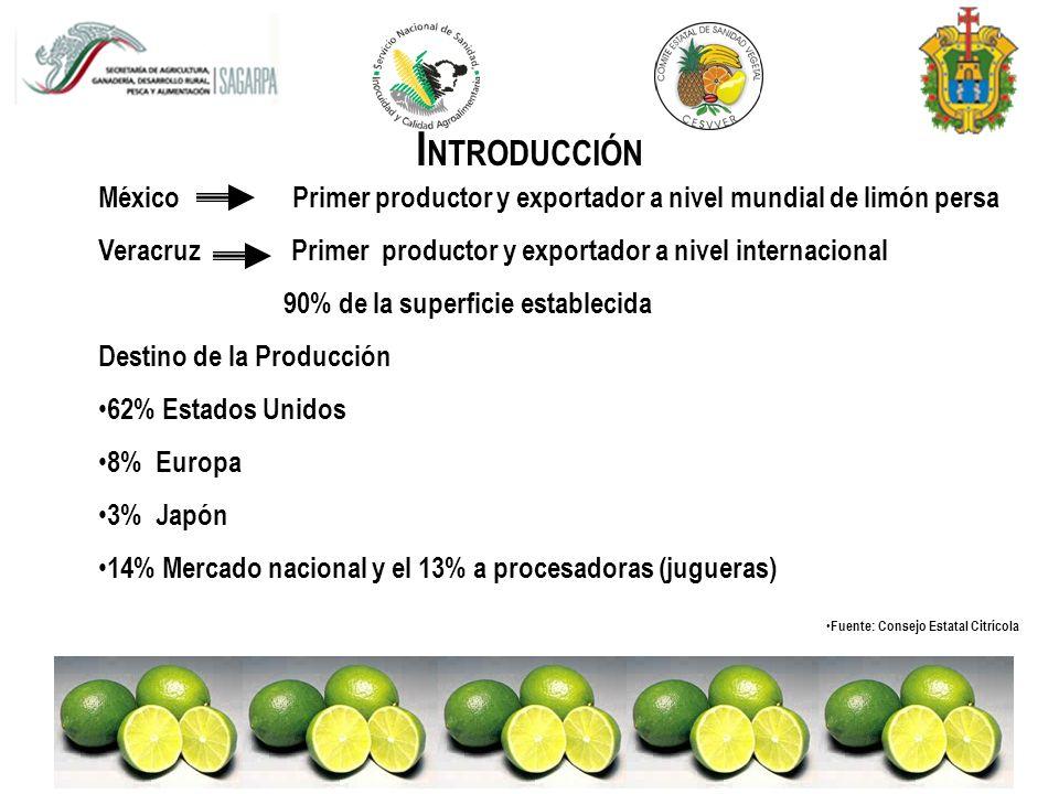 INTRODUCCIÓN México Primer productor y exportador a nivel mundial de limón persa.