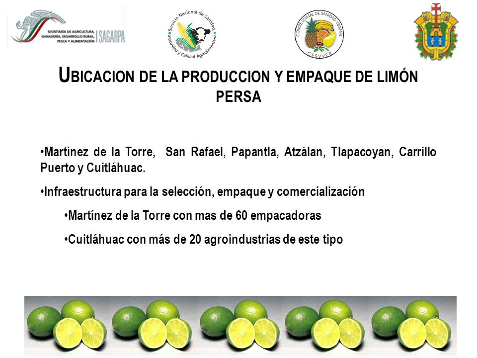 UBICACION DE LA PRODUCCION Y EMPAQUE DE LIMÓN PERSA
