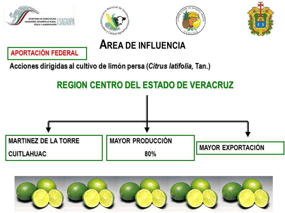 REGION CENTRO DEL ESTADO DE VERACRUZ