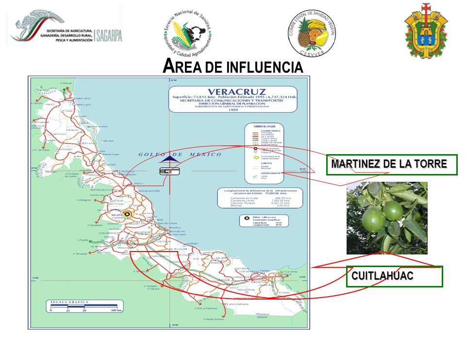 AREA DE INFLUENCIA MARTINEZ DE LA TORRE CUITLAHUAC