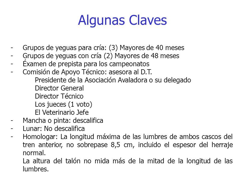 Algunas Claves Grupos de yeguas para cría: (3) Mayores de 40 meses