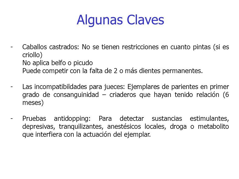Algunas Claves Caballos castrados: No se tienen restricciones en cuanto pintas (si es criollo) No aplica belfo o picudo.