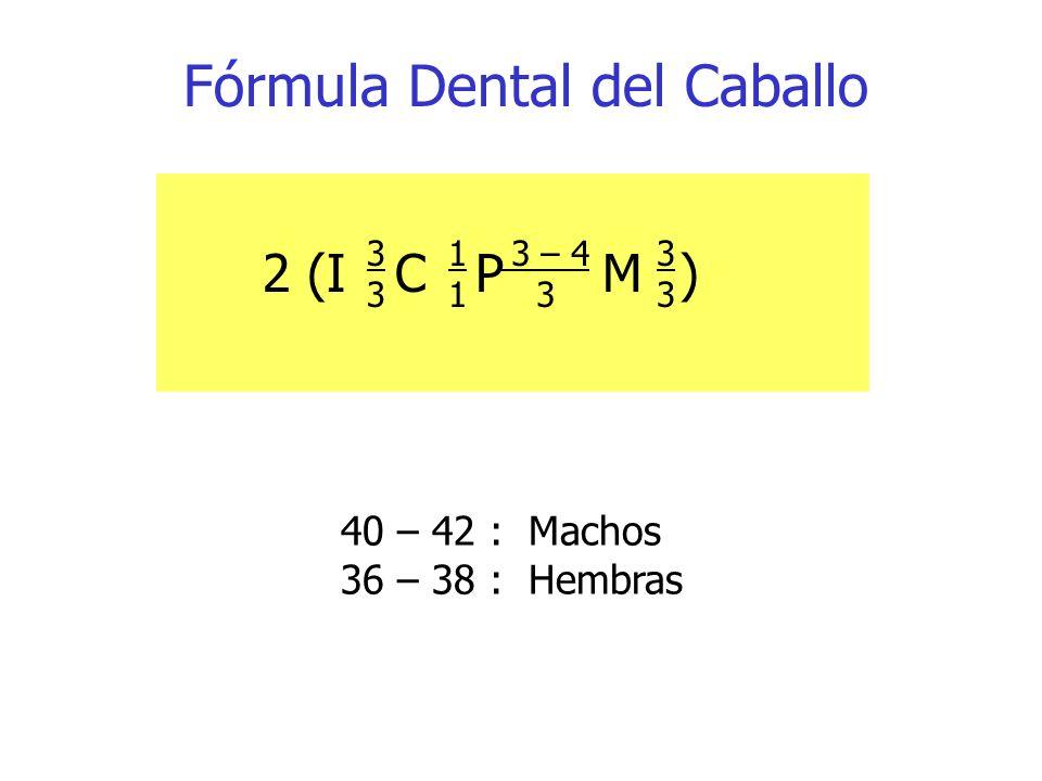 Fórmula Dental del Caballo