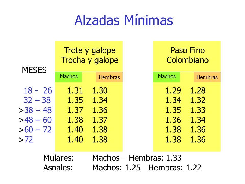 Alzadas Mínimas Trote y galope Trocha y galope Paso Fino Colombiano
