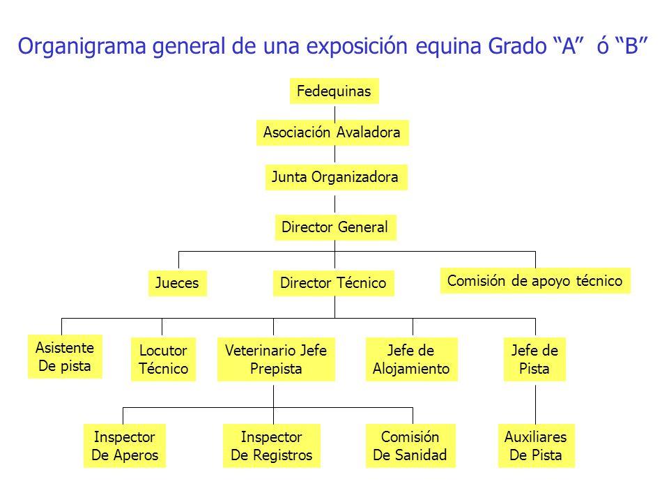 Organigrama general de una exposición equina Grado A ó B