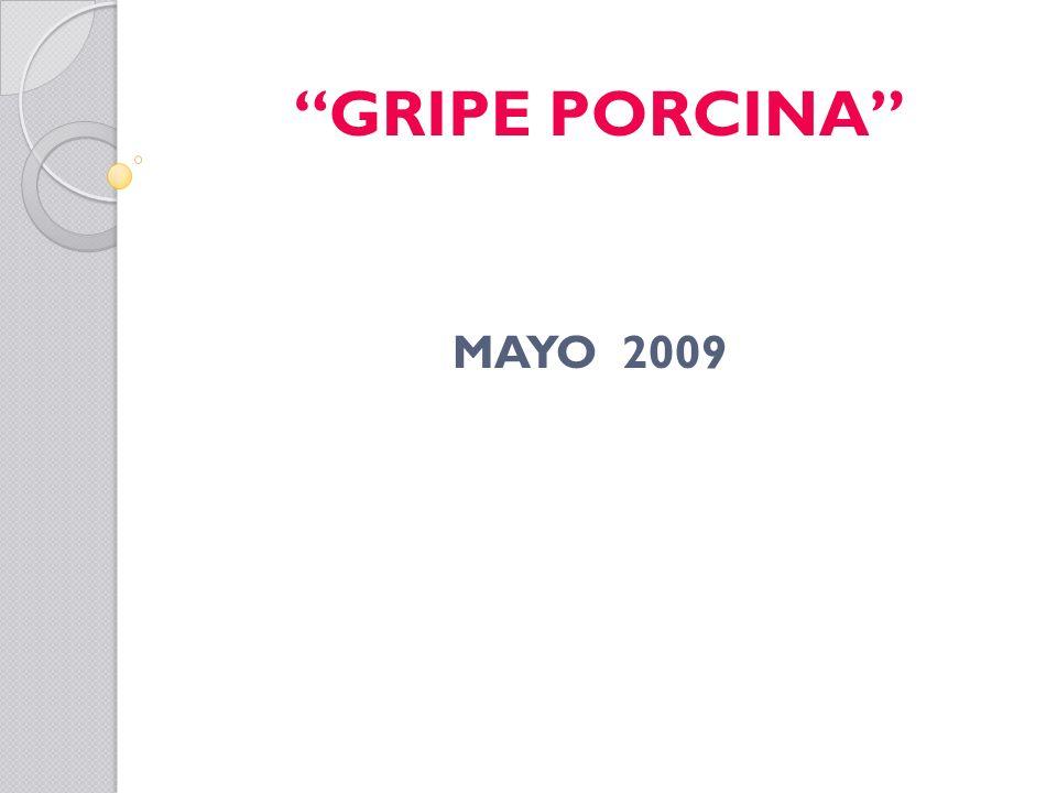 GRIPE PORCINA MAYO 2009