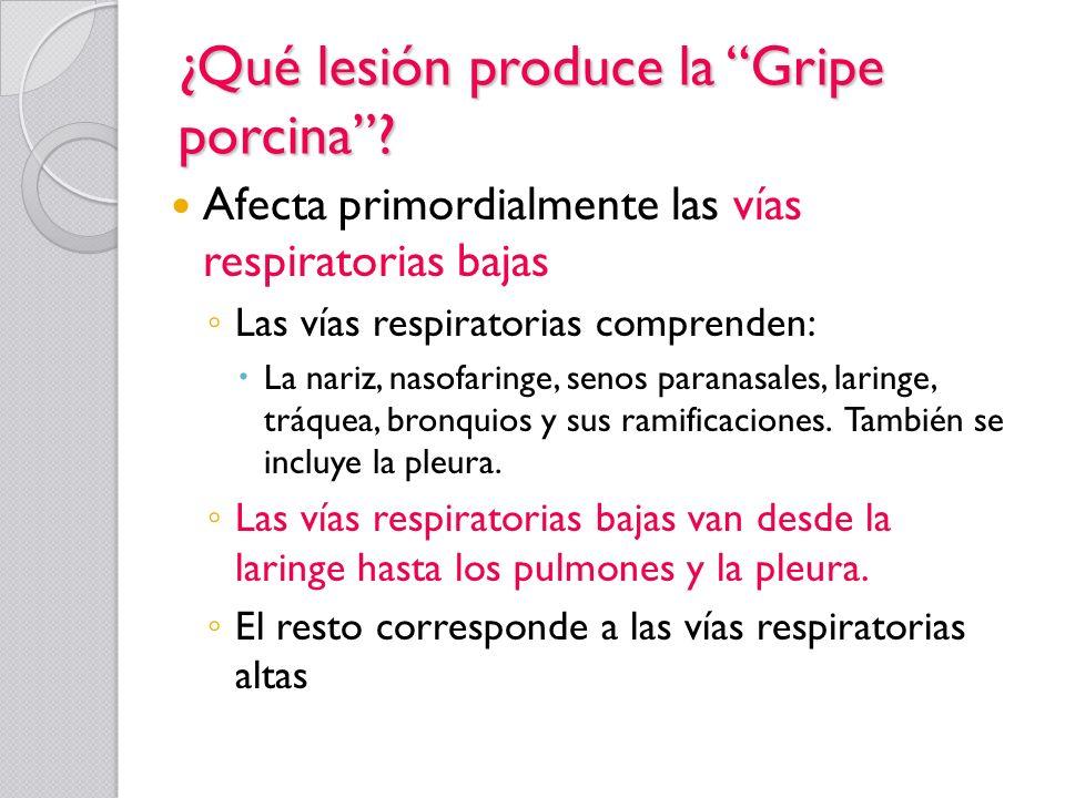 ¿Qué lesión produce la Gripe porcina