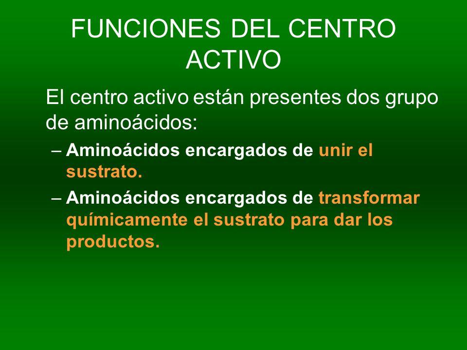 FUNCIONES DEL CENTRO ACTIVO