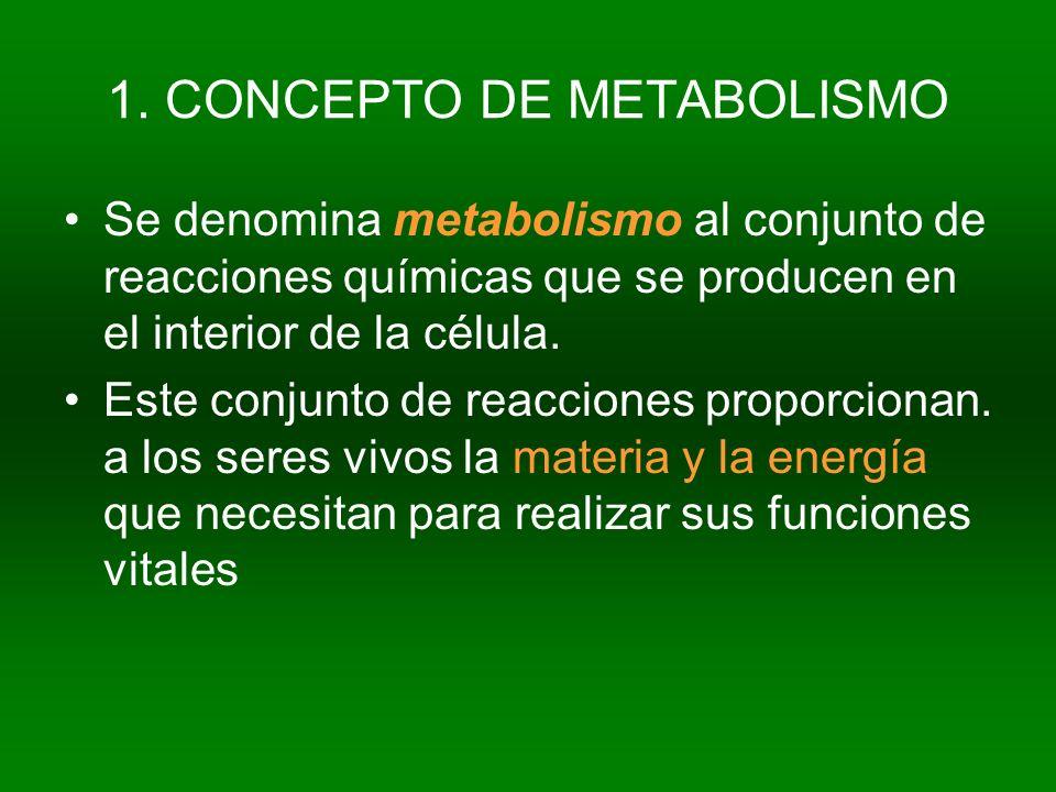 1. CONCEPTO DE METABOLISMO