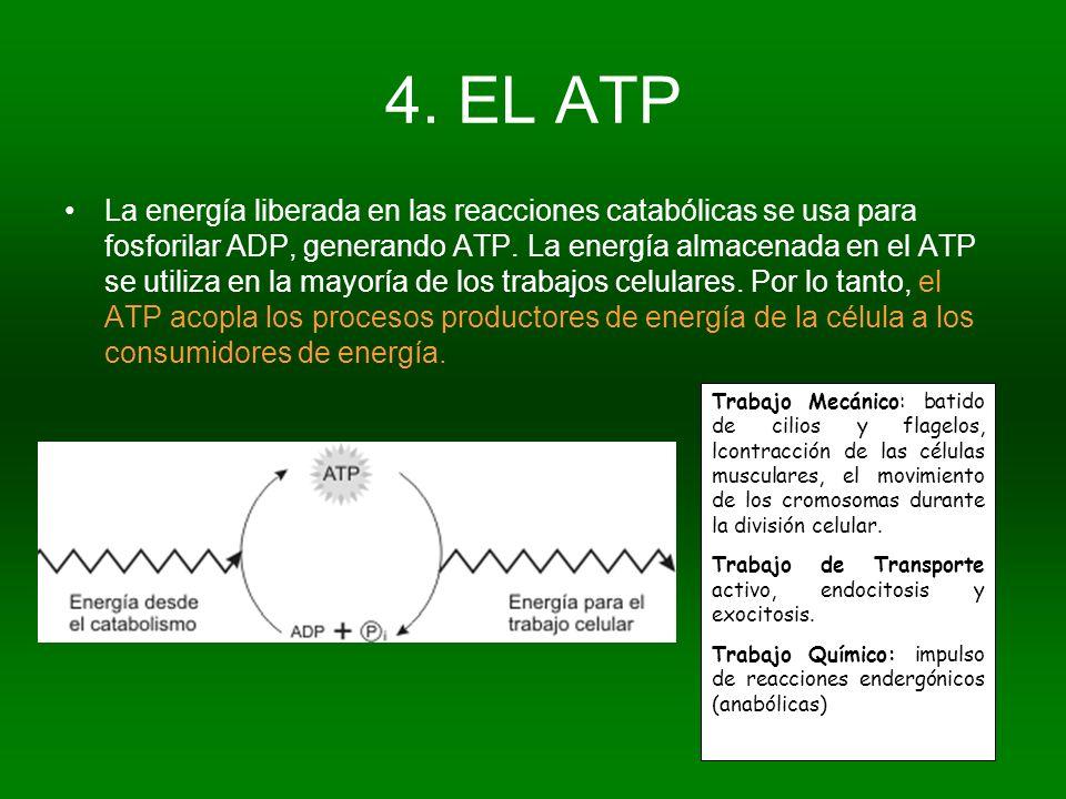 4. EL ATP