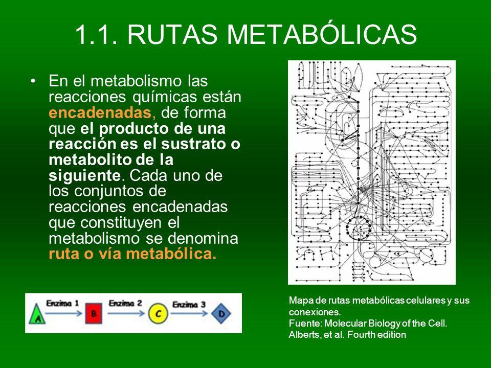 1.1. RUTAS METABÓLICAS