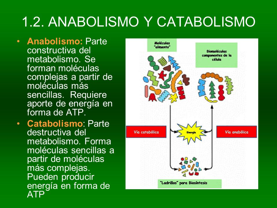 1.2. ANABOLISMO Y CATABOLISMO