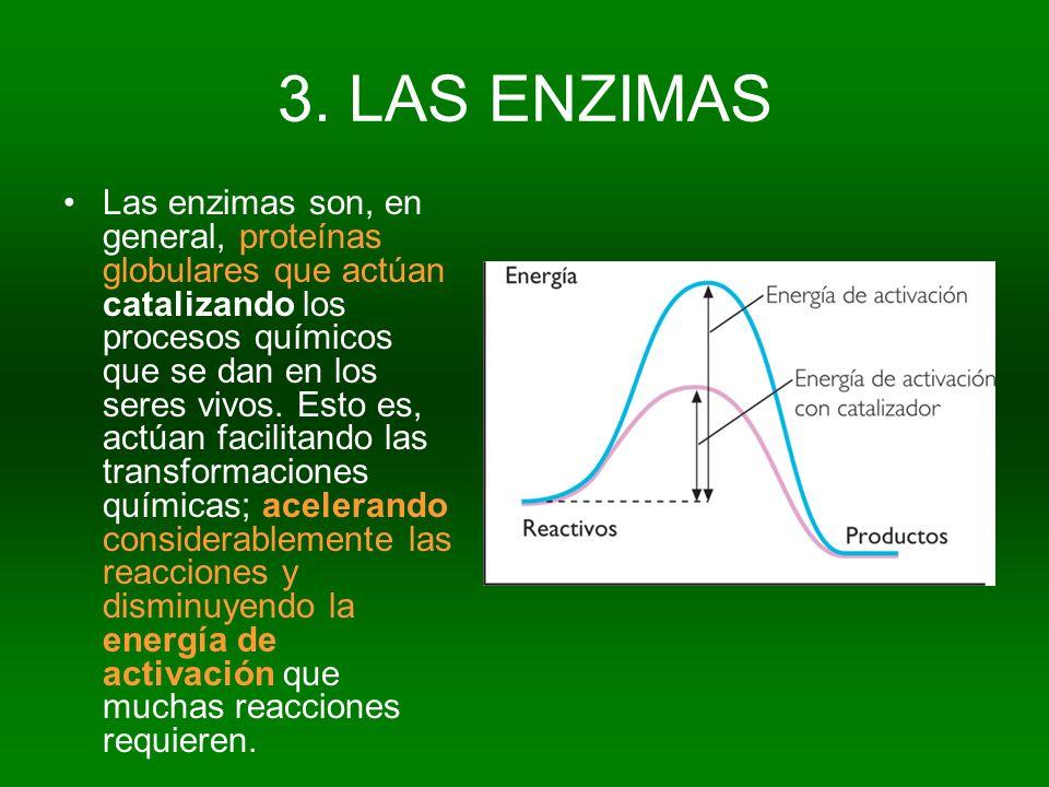 3. LAS ENZIMAS