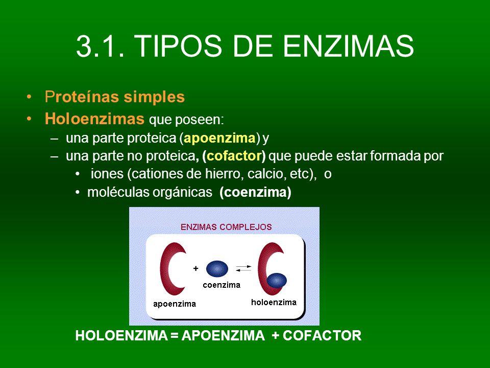 3.1. TIPOS DE ENZIMAS Proteínas simples Holoenzimas que poseen: