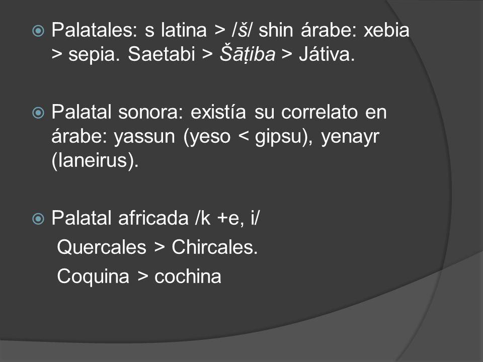 Palatales: s latina > /š/ shin árabe: xebia > sepia