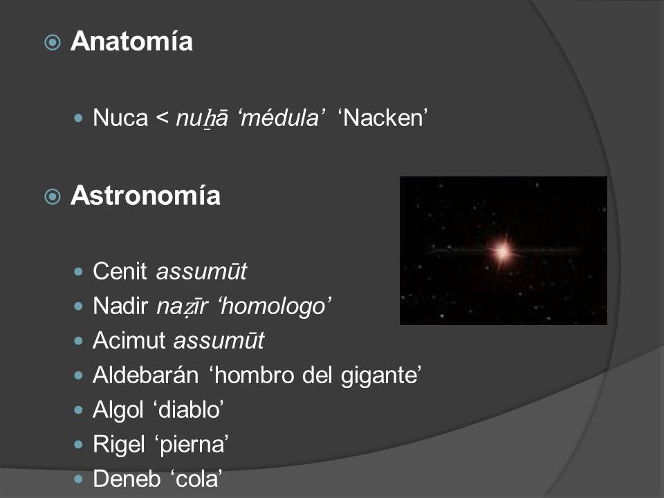 Anatomía Astronomía Nuca < nuẖā 'médula' 'Nacken' Cenit assumūt