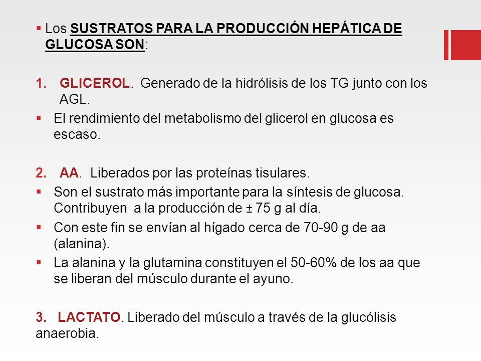 Los SUSTRATOS PARA LA PRODUCCIÓN HEPÁTICA DE GLUCOSA SON: