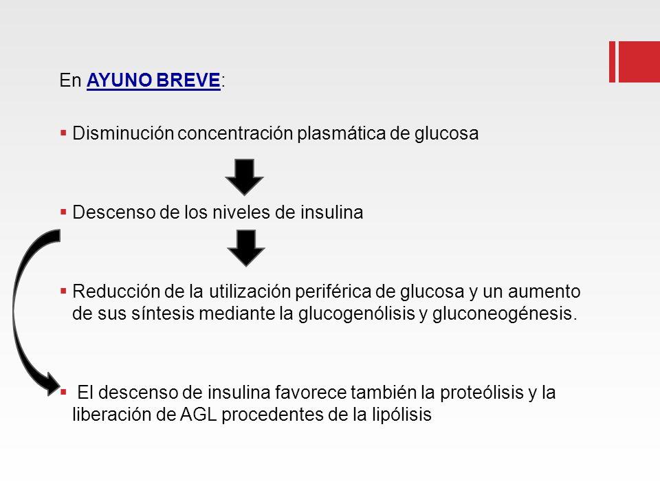 En AYUNO BREVE: Disminución concentración plasmática de glucosa. Descenso de los niveles de insulina.
