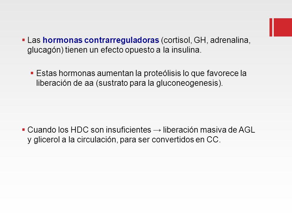 Las hormonas contrarreguladoras (cortisol, GH, adrenalina, glucagón) tienen un efecto opuesto a la insulina.