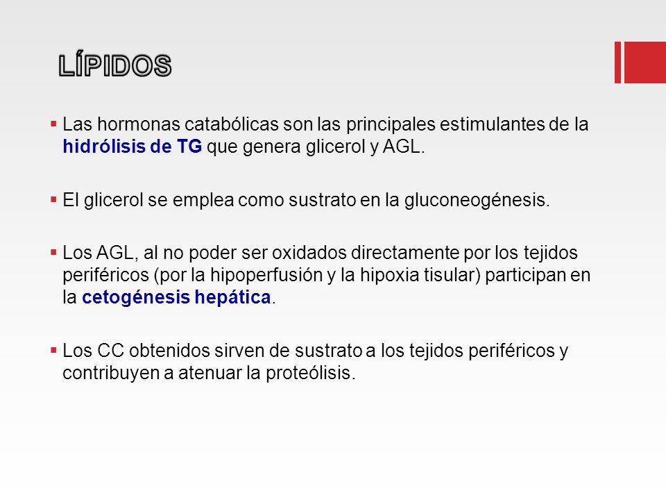 LÍPIDOS Las hormonas catabólicas son las principales estimulantes de la hidrólisis de TG que genera glicerol y AGL.