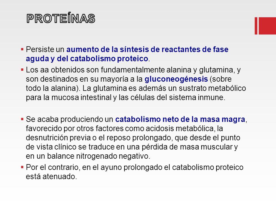 Persiste un aumento de la síntesis de reactantes de fase aguda y del catabolismo proteico.