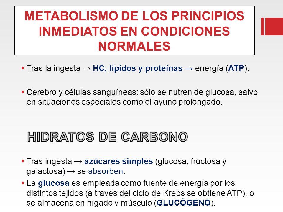 METABOLISMO DE LOS PRINCIPIOS INMEDIATOS EN CONDICIONES NORMALES