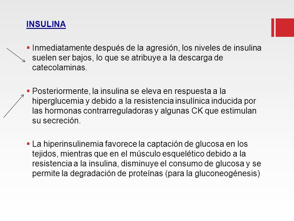 INSULINA Inmediatamente después de la agresión, los niveles de insulina suelen ser bajos, lo que se atribuye a la descarga de catecolaminas.
