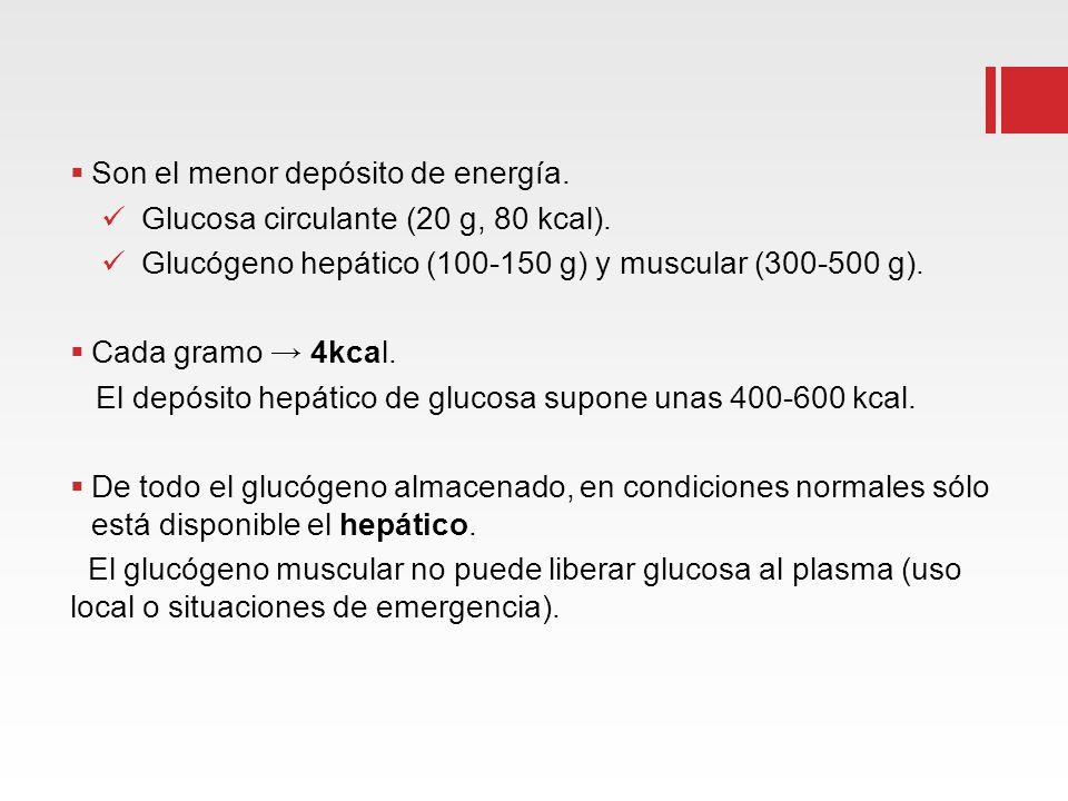 Son el menor depósito de energía. Glucosa circulante (20 g, 80 kcal).