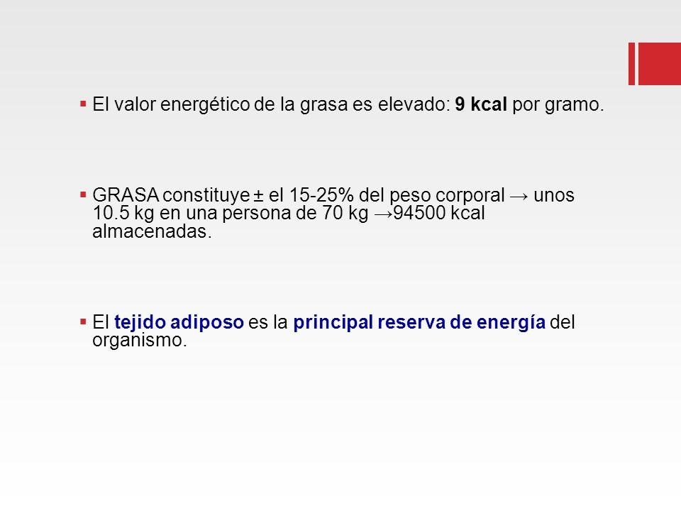 El valor energético de la grasa es elevado: 9 kcal por gramo.