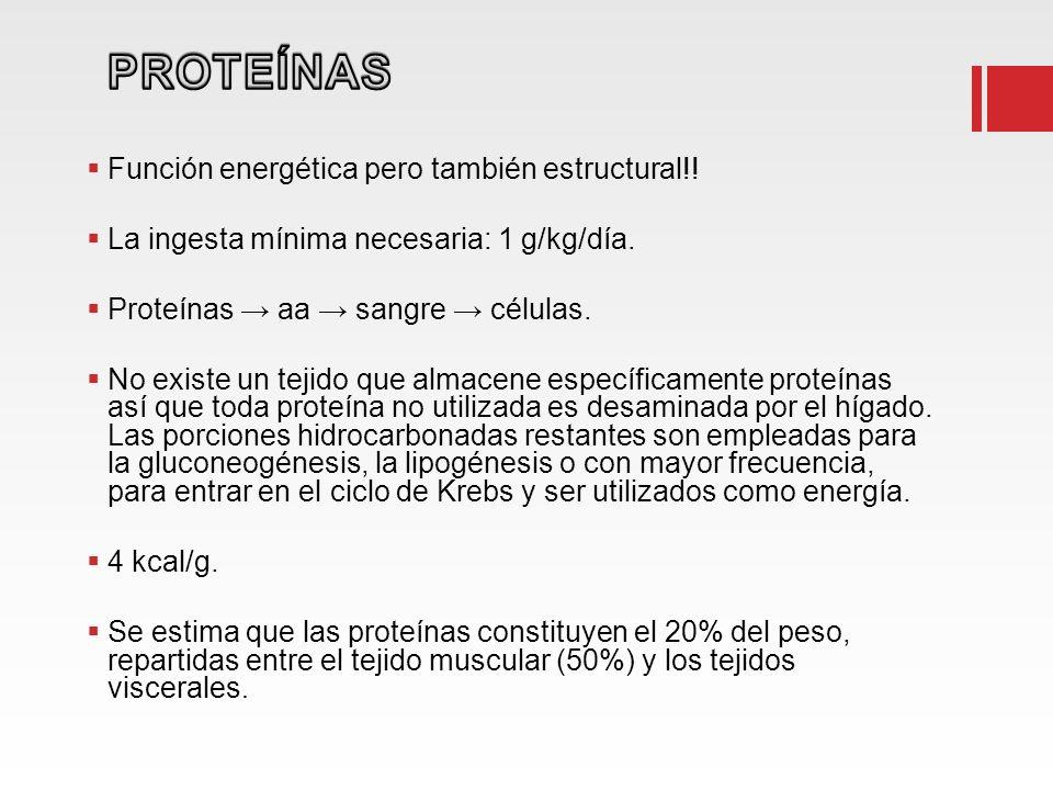 PROTEÍNAS Función energética pero también estructural!!
