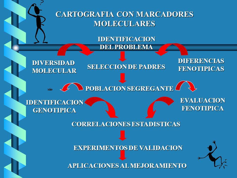 CARTOGRAFIA CON MARCADORES MOLECULARES IDENTIFICACION DEL PROBLEMA