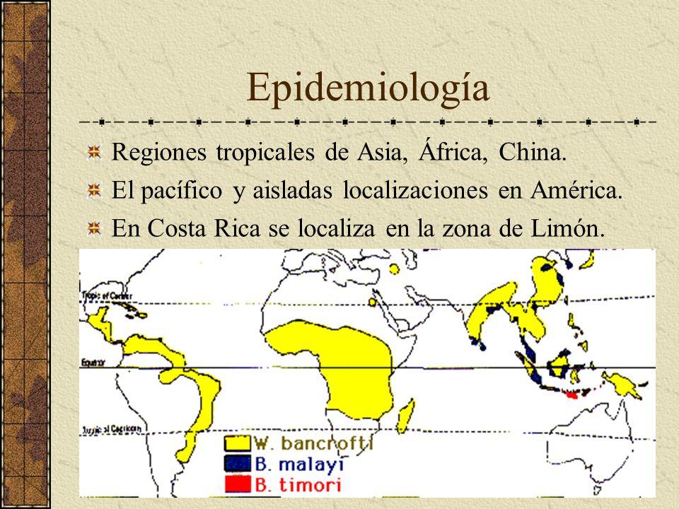 Epidemiología Regiones tropicales de Asia, África, China.