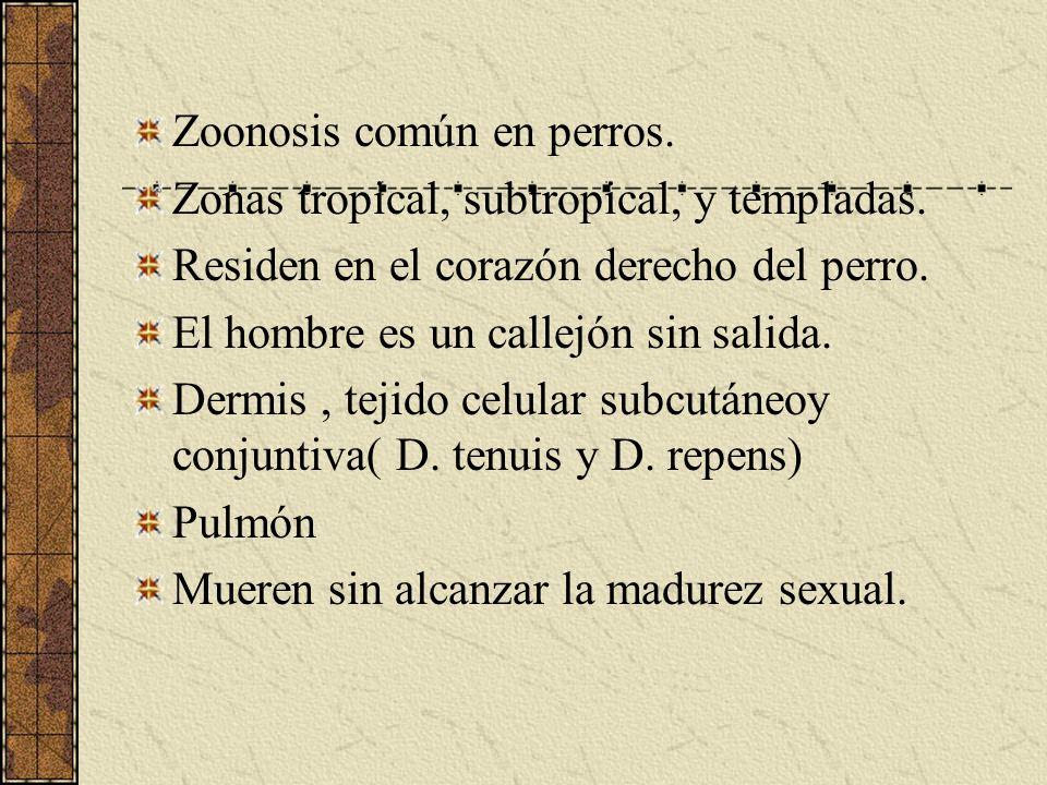 Zoonosis común en perros.