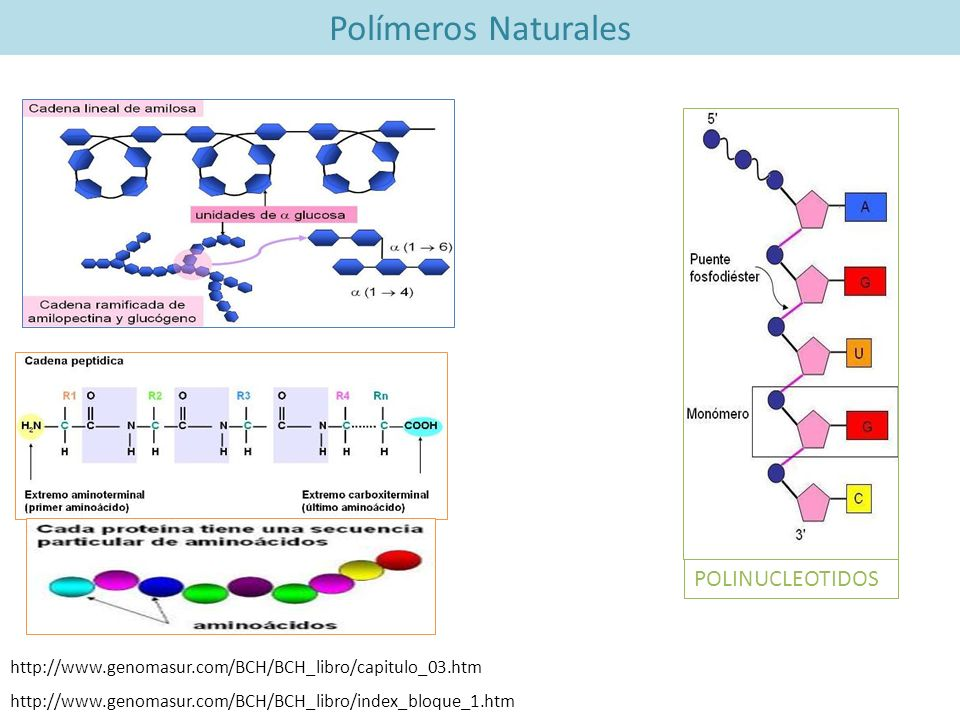 Polímeros Naturales POLINUCLEOTIDOS