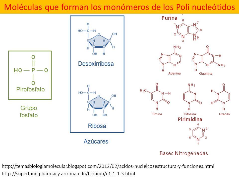Moléculas que forman los monómeros de los Poli nucleótidos