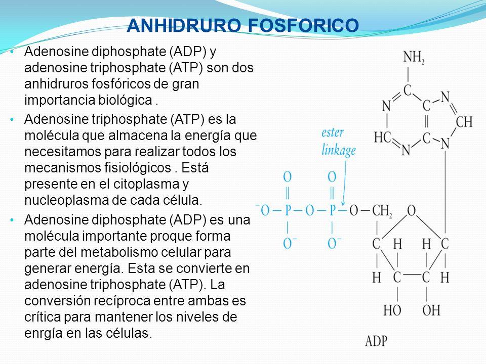 ANHIDRURO FOSFORICO Adenosine diphosphate (ADP) y adenosine triphosphate (ATP) son dos anhidruros fosfóricos de gran importancia biológica .