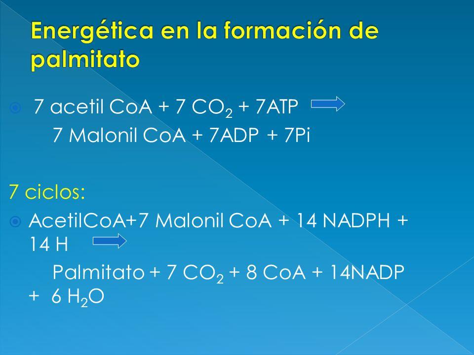 Energética en la formación de palmitato