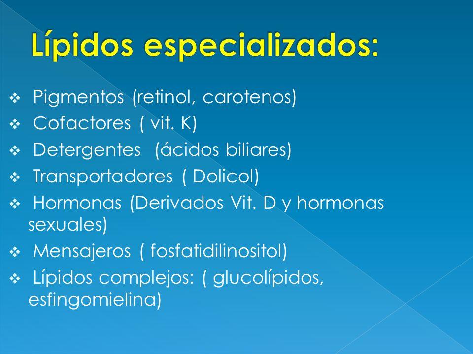 Lípidos especializados: