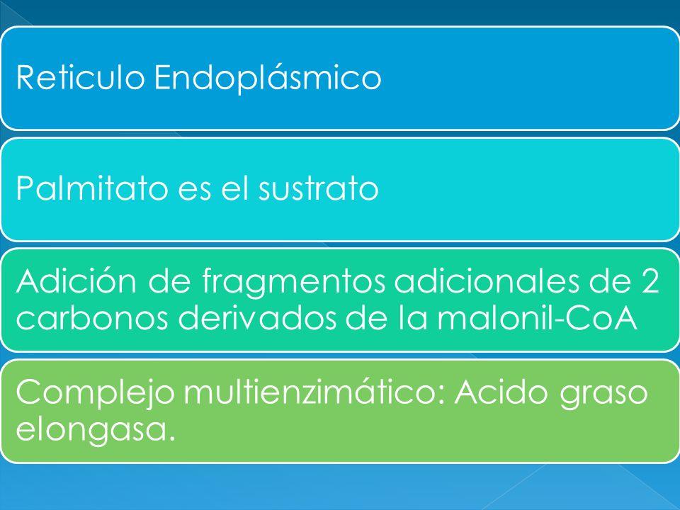 Reticulo Endoplásmico
