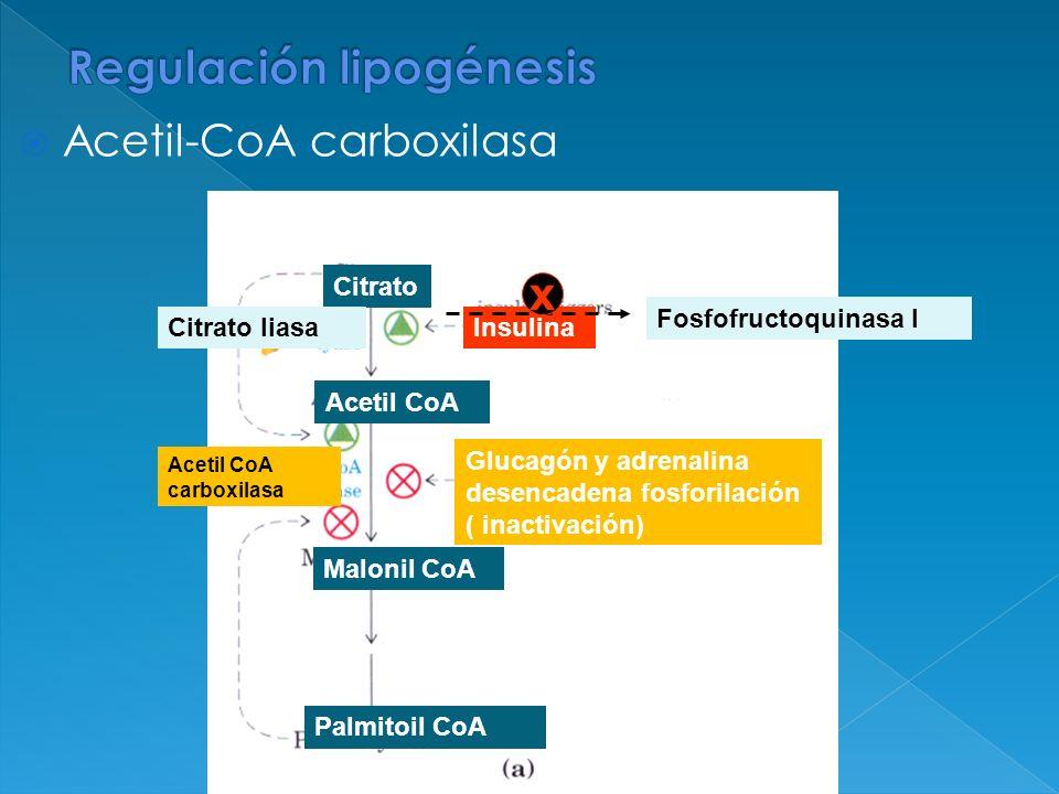 Regulación lipogénesis