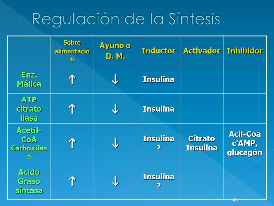 Regulación de la Síntesis