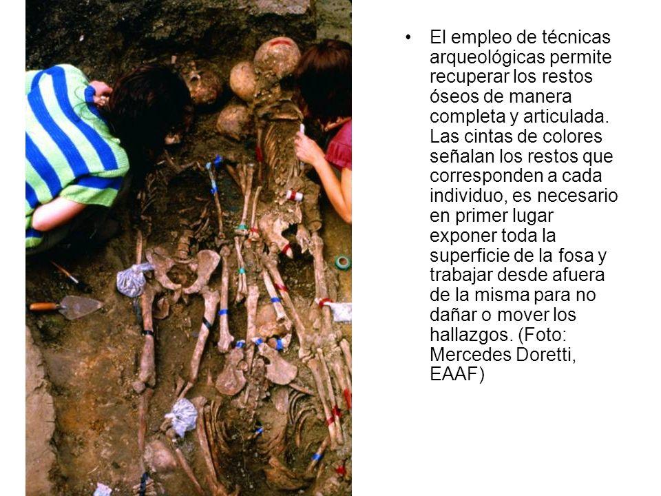 El empleo de técnicas arqueológicas permite recuperar los restos óseos de manera completa y articulada.