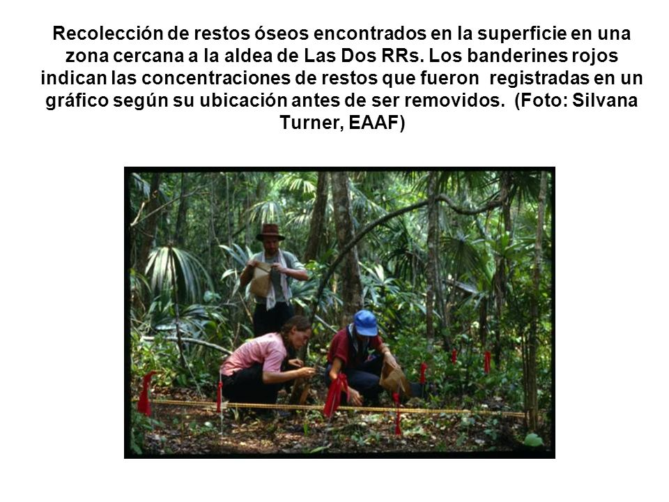Recolección de restos óseos encontrados en la superficie en una zona cercana a la aldea de Las Dos RRs.